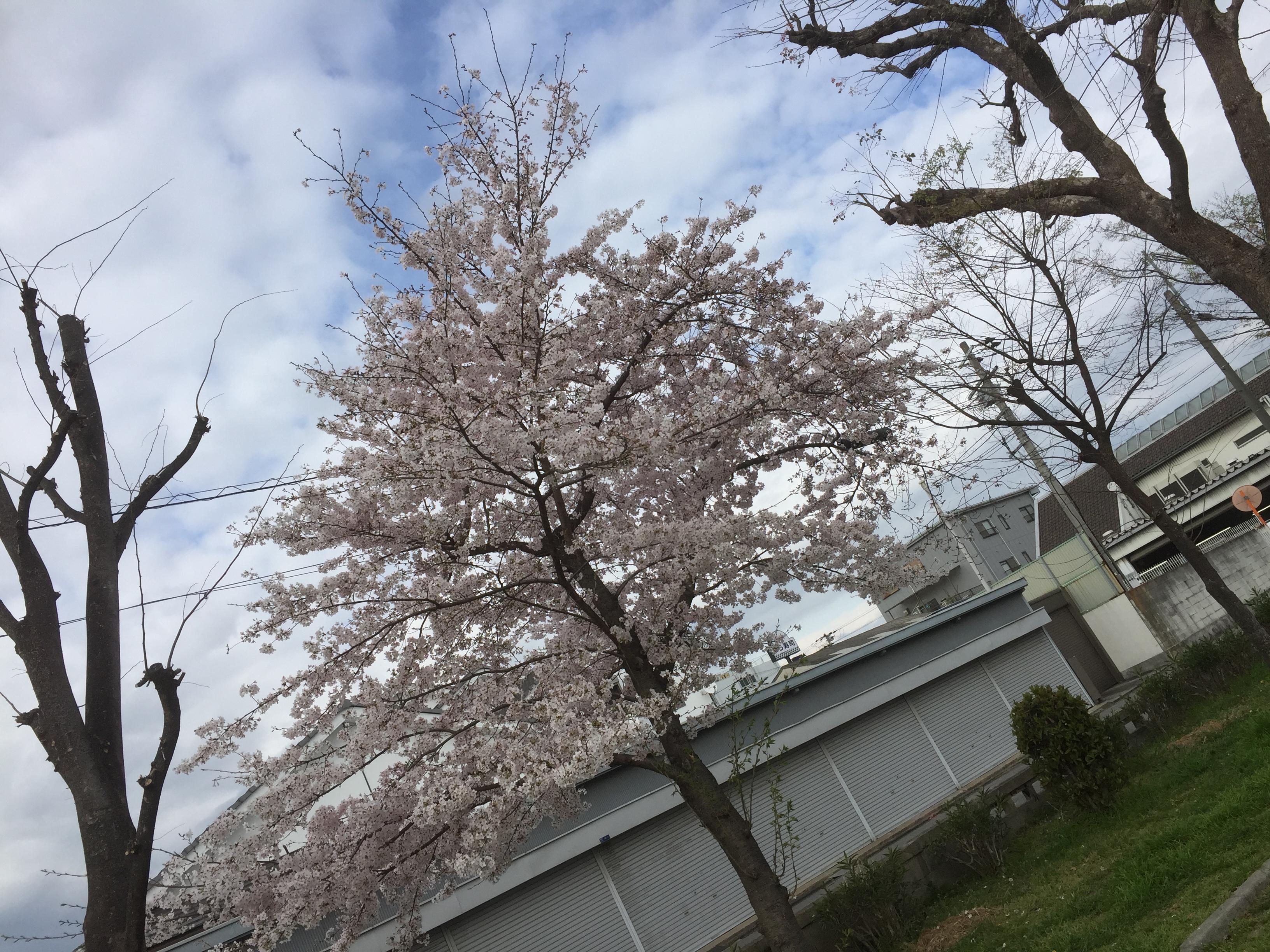 ファイル 2016-04-04 19 53 15