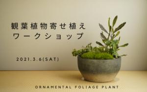 ★2021.3.6(sat)観葉植物寄せ植えワークショップ